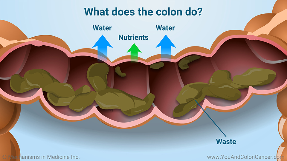 What does the colon do?
